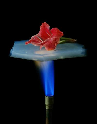 氣凝膠具有強大隔熱效果。(維基百科公有領域)