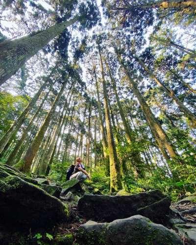 東眼山國家森林遊樂區是早期北部的重要林場,現在則是夏日消暑的好地方。(圖/IG@oh.she.is.yen)