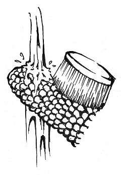 使用流動的水,仔細用刷子將玉米粒間隙刷乾淨。(圖/商周出版提供)