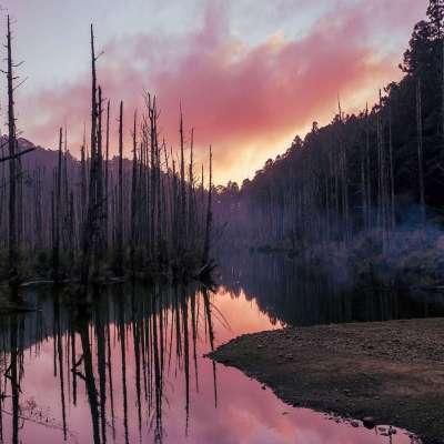 一根根的枝幹立在水面上,加上倒影一同散發出美麗且神秘的氛圍,吸引許多登山客特地前來欣賞。(圖/台灣旅行小幫手提供)
