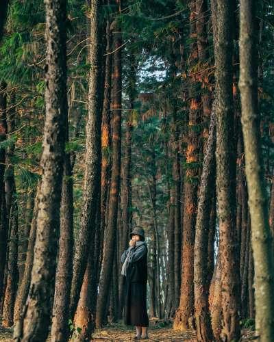 九天黑森林擁有著神秘的美感!(圖/wumaofun@instagram提供)