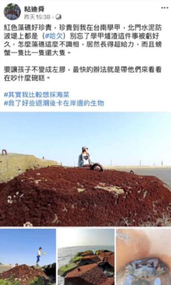 日前作家粘迪舜在臉書表示,台南學甲北門水泥防波堤上長滿了紅色藻礁。(取自臉書)