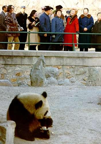 中國貓熊外交:1972年2月22日,美國時任總統尼克森夫人帕特在北京動物園觀看大熊貓。(Public Domain)
