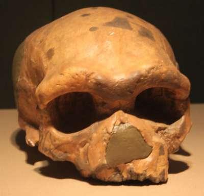 大荔人頭骨(Gary Todd@Wikipedia/CC0)