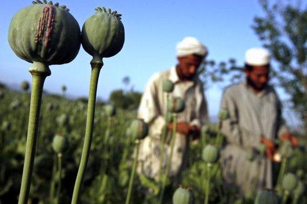 阿富汗鴉片產量飆新高 美國緝毒大挫敗