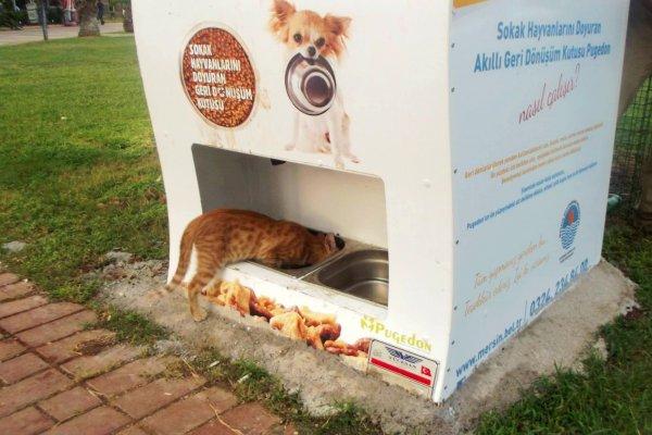 你用過的寶特瓶,可以讓流浪貓狗飽餐一頓!