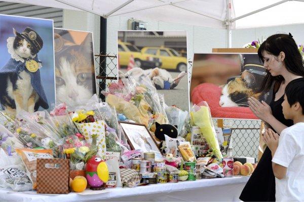 日本最紅貓站長驟逝 三千民眾送別小玉