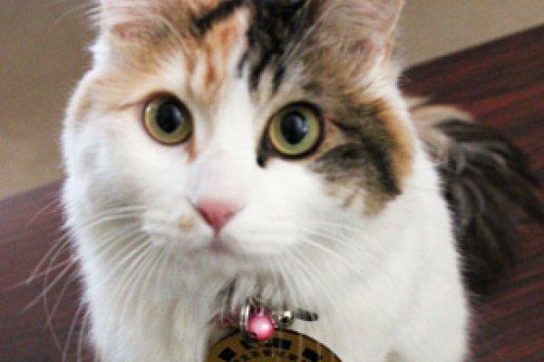 日本貓咪站長小玉後繼有人了! 新站長「二玉」11日上任