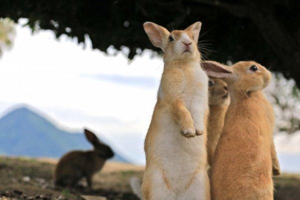 兔子島:來洗療癒滿分的兔子浴