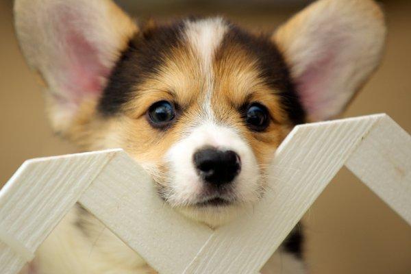 狗狗怎麼教都學不會?這樣做輕鬆改掉亂撒尿的壞習慣