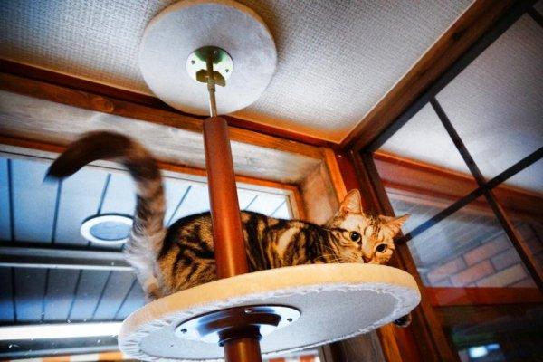 不只能跟貓咪玩,還能帶牠們回家!到「保護貓咖啡廳」跟貓咪相親