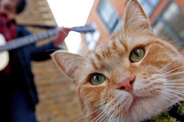 以為是我幫了你,結果反倒你救了我...這隻街貓如何讓流浪漢變暢銷作家?