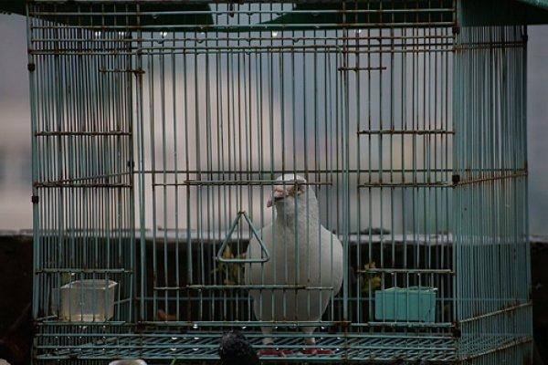 你所不知道的動物特工!冷戰時美國CIA訓練王牌間諜:鴿子高空探敵情、貓咪悄悄竊聽