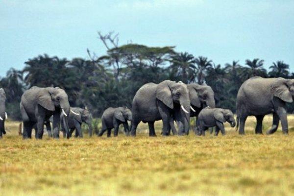 透視中國:中美聯手,大象有救