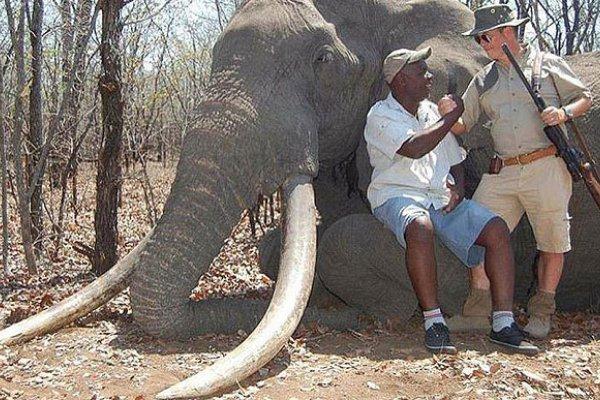 又是辛巴威!高齡國寶象成德國獵人槍下亡魂