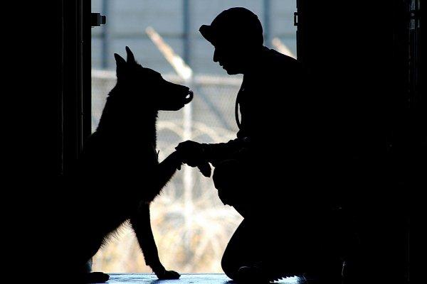 狗為什麼像主人?不是巧合 是熟悉感作祟