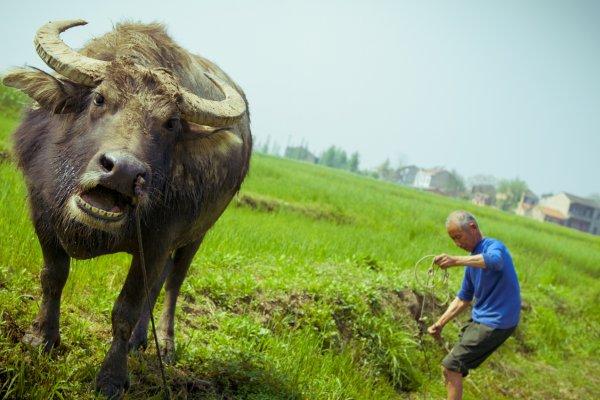 中國唯一,無毒無害安全食材就在這!官位不夠高就不知道「御用農場」
