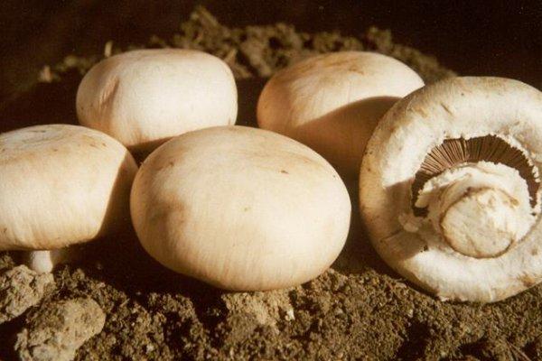 網路謠言!網傳蘑菇有毒搭配 食藥署闢謠:誇大不實