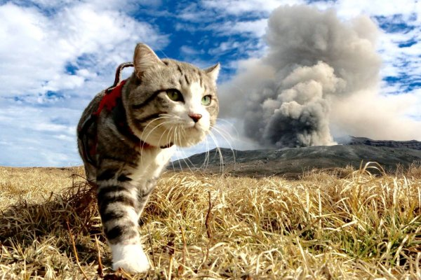 收容所、繁殖場、罕見疾病都打不倒牠們!5隻貓咪在網路爆紅,驕傲走出新生活