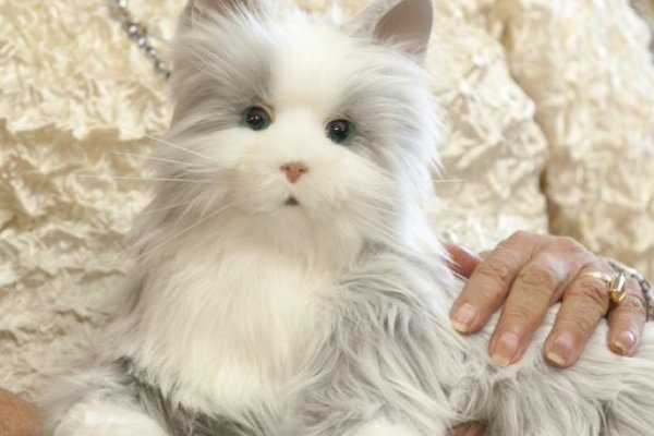 機器寵物來了!超擬真貓咪伴高齡長者