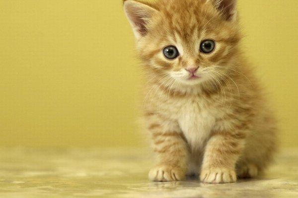貓咪發出呼嚕聲真的表示高興嗎?日本貓醫生解答,原來貓咪這樣想!