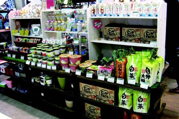 在辦公桌上種菜,無毒又乾淨!告訴你為何日本近年興起室內栽培熱