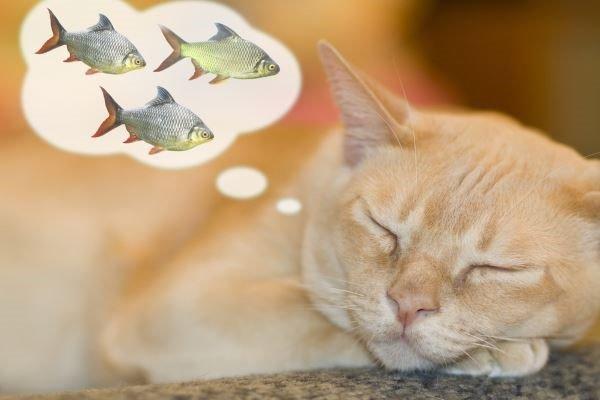 寵愛貓咪餵鮑魚?小心,愛貓因此中毒…