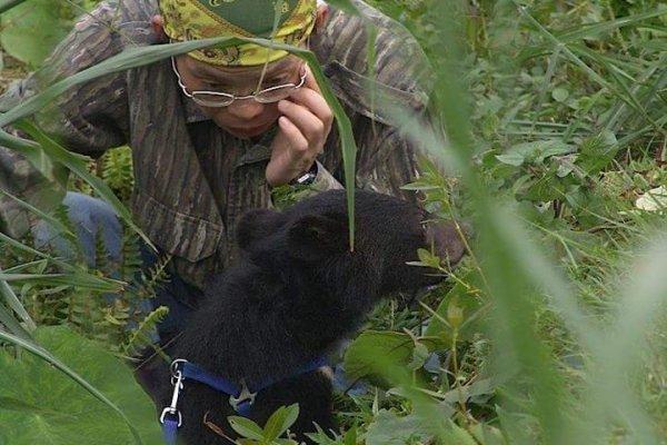 生態專家墜谷,黑熊媽媽嘆研究環境不如人