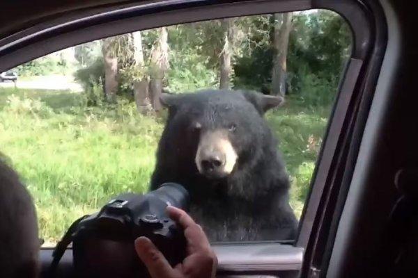 這家人原以為在車上拍黑熊很安全,沒想到下一秒發生的事,讓孩子們都慘叫了!