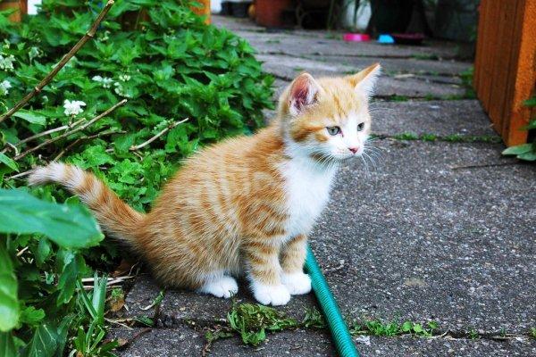 不是貓狗、不夠可愛的動物,就不需要保護?從法條看台灣動保人士的自私
