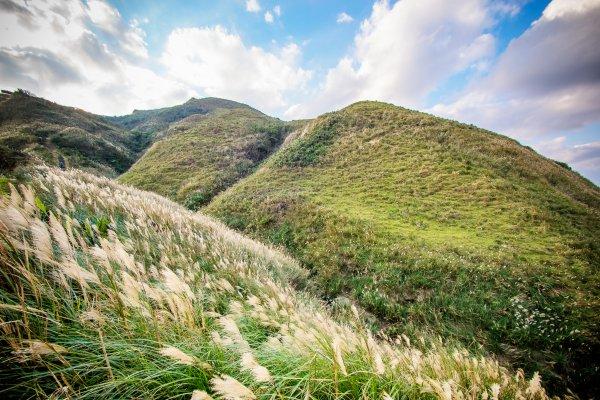 秋日限定美景!造訪內行人狂推的草嶺古道秘境芒草林,台北出發玩一天就超盡興