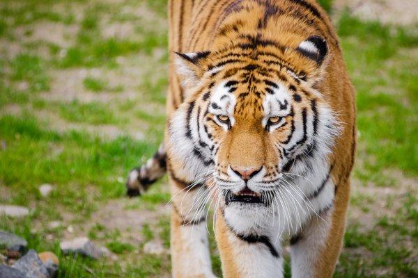 世界上性能力最強的動物是誰?名作家苦苓解密,先別傻了,絕不是老虎啦