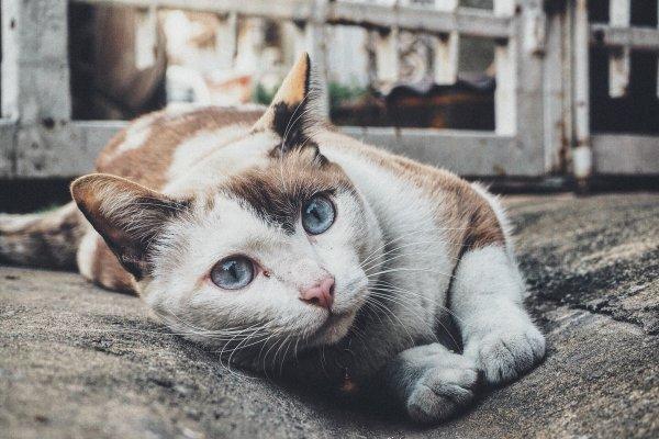 令幾十億貓奴都驚呆的事實!居然有近一成的貓咪不會撥砂,原因竟是因為牠們是…