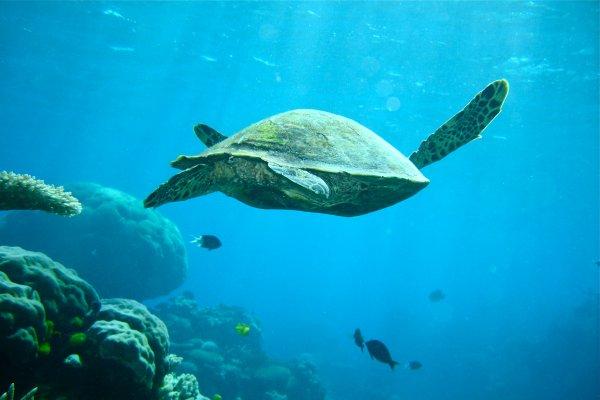 潛水客「摸不到」海龜竟用腳重踩!小琉球首例騷擾海龜現行犯送辦