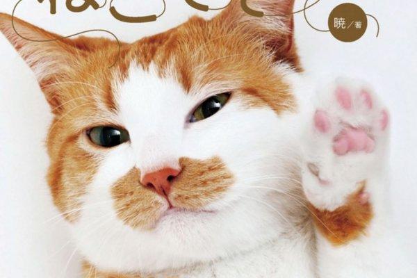 心型肉球惹人疼!日本命理大師教你看貓手相:從掌球形狀看個性,玩玩就好別太認真