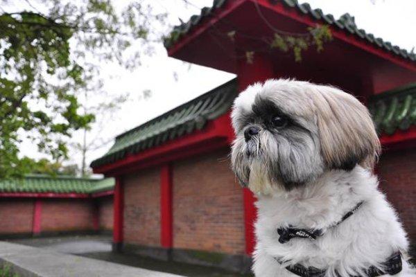 讀者投書:狗狗不聽話,就是要打罵、教訓完就乖了?其實有時候是主人不懂狗啊
