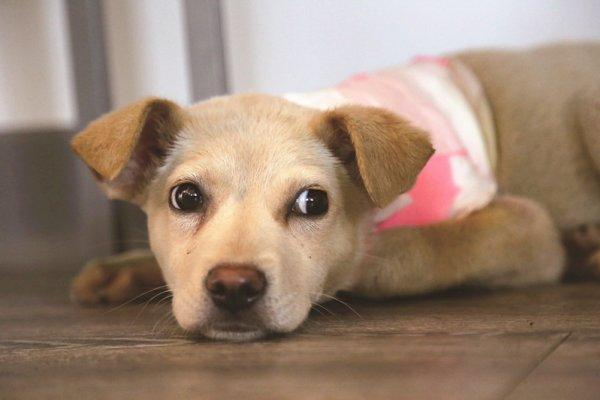鑽進便當盒找東西吃,卻因此勒斷了腳…吃完便當這樣綁,你可以拯救無數流浪狗