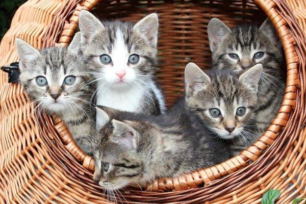新手貓奴看這裡!施打疫苗前後,要注意哪些事情你知道嗎?