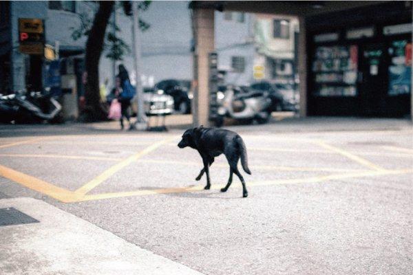 為何人們那麼容不下流浪狗?她道出收容所裡的悲慘景象,控訴人類的殘忍…