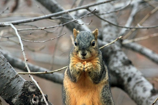 為何活蹦亂跳的超可愛小松鼠,竟會引起超大停電危機?台電的解釋令人超傻眼…