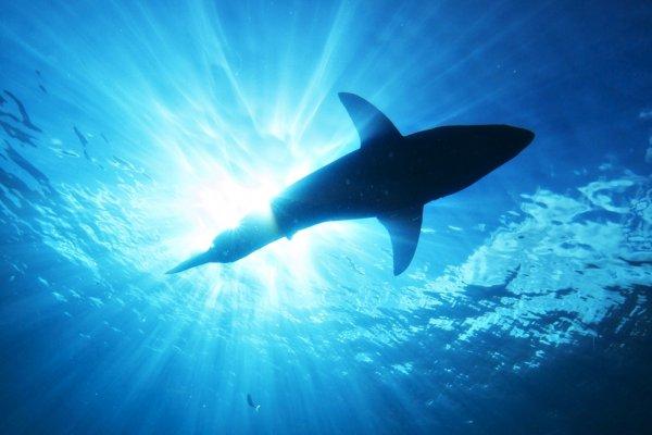 鯊魚真是殺人魔王?潛水教練打臉40年種種迷思,看到人類,連鯊魚都會嚇跑啦!