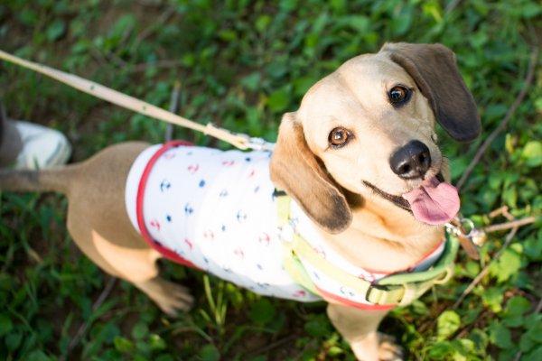 為何狗狗吞一口葡萄就很危險?動物專家公開毛孩「水果指南」,吃這2種最健康!