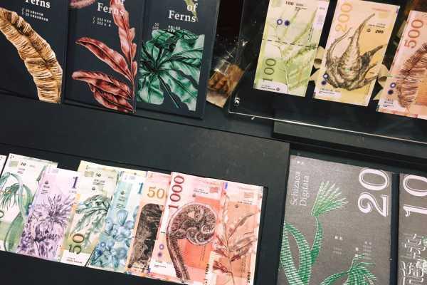 不只世大運影片得獎!大學生用國寶蕨類設計出超美新台幣,奪下獲獎率0.8%的紅點最佳設計