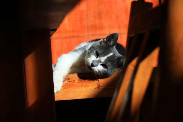 數隻貓咪被關在密閉空間,最後只剩下毛皮或白骨…這位不負責任的飼主實在太誇張