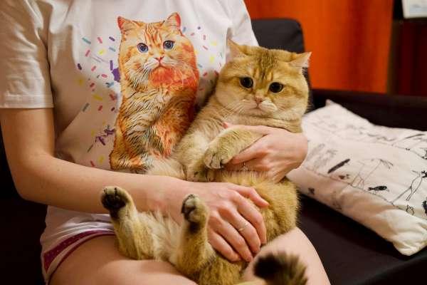 全台有6成貓狗像「阿嬤養的」!專家:希望牠們長壽,就要遵守「3要1不」幫牠們減肥