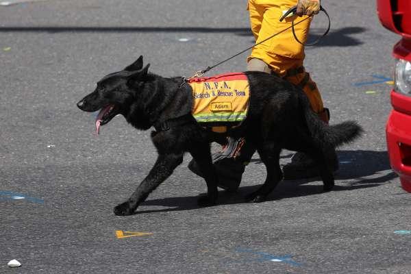 5隻搜救犬退役,竟湧入105人申請認養!徐國勇:連我家人都超哈牠們