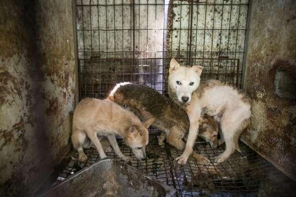 硬要立法禁狗肉,我就在國會另一邊吃給你看!韓國爭議最大傳統文化﹣狗肉到底該不該吃?