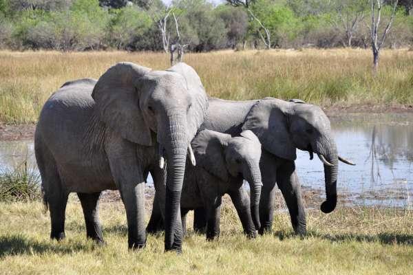 【謝幸吟專欄】肯亞國家保護區的獨特風光:大象、長頸鹿、駝鳥近在咫尺