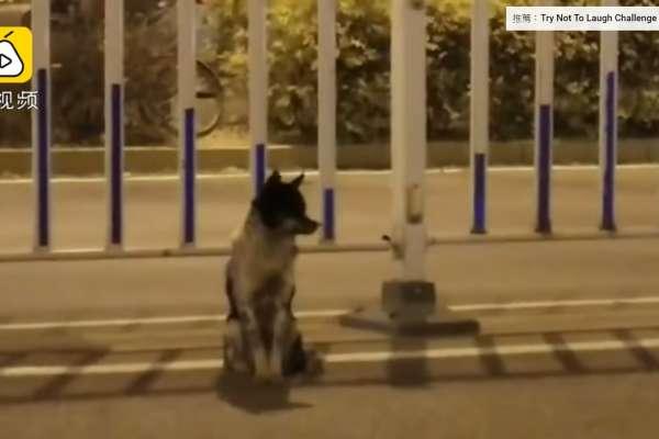 女孩車禍身亡之後,她的狗狗在馬路中間等她,等了80天