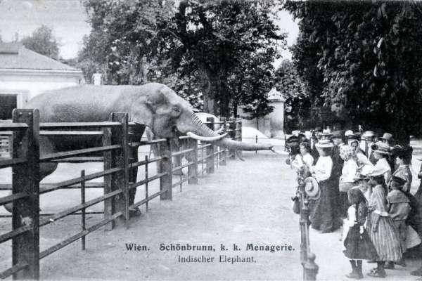 動物園在人類歷史中為何出現?他用哲學觀點解析:從動物園看出人類對其他物種滿滿的「惡意歧視」